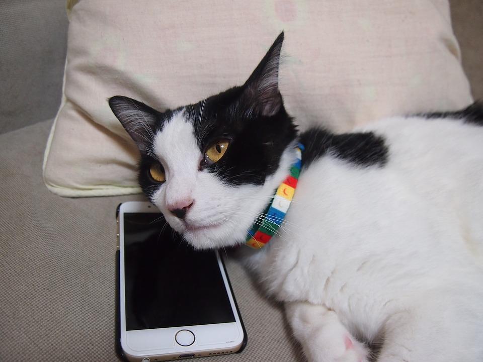 cat-1151533_960_720
