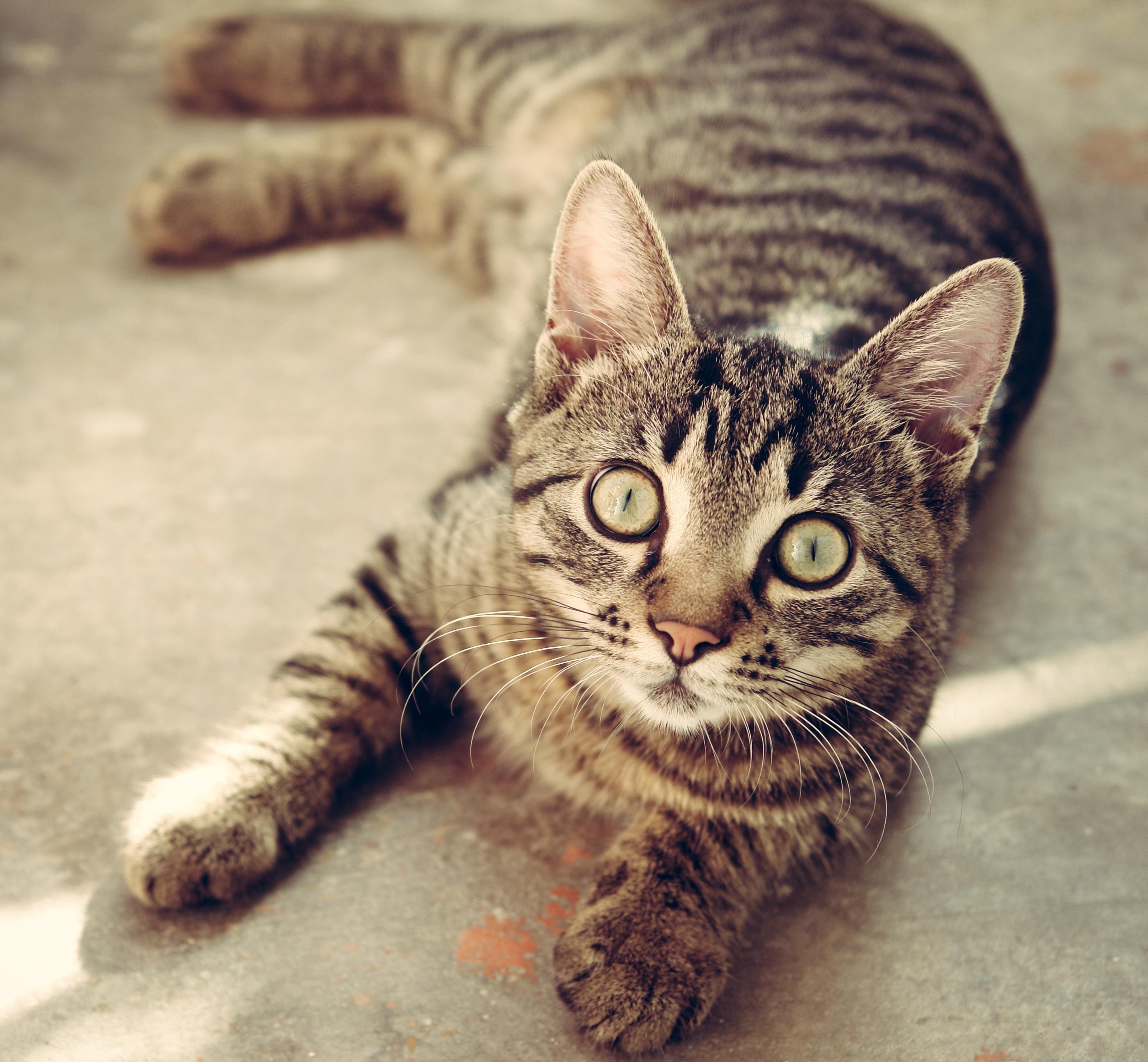 cat-618470