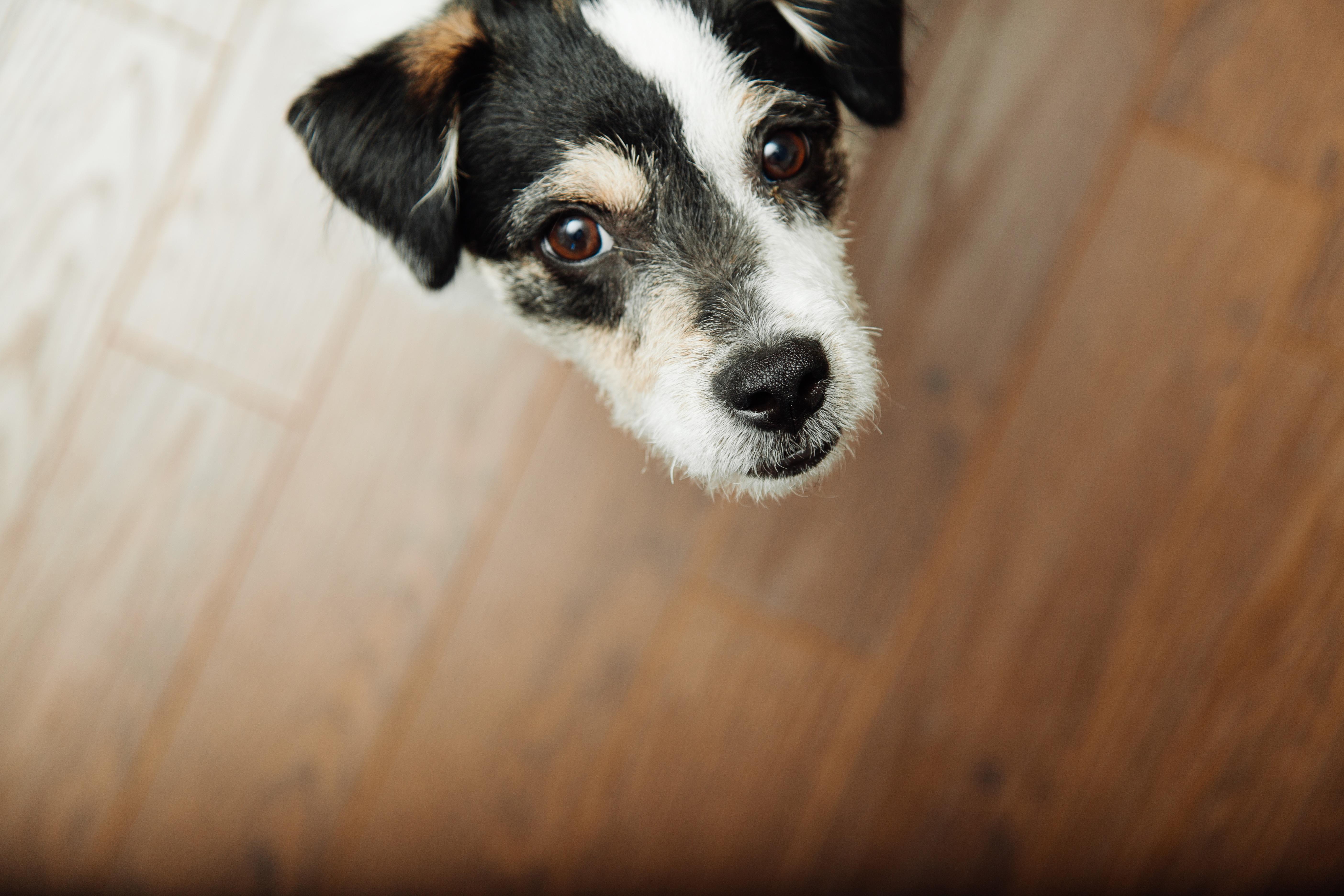 dog-926725