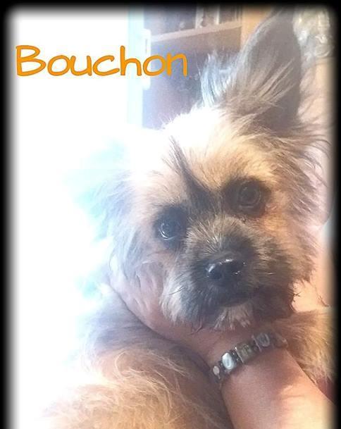 Bouchon 2