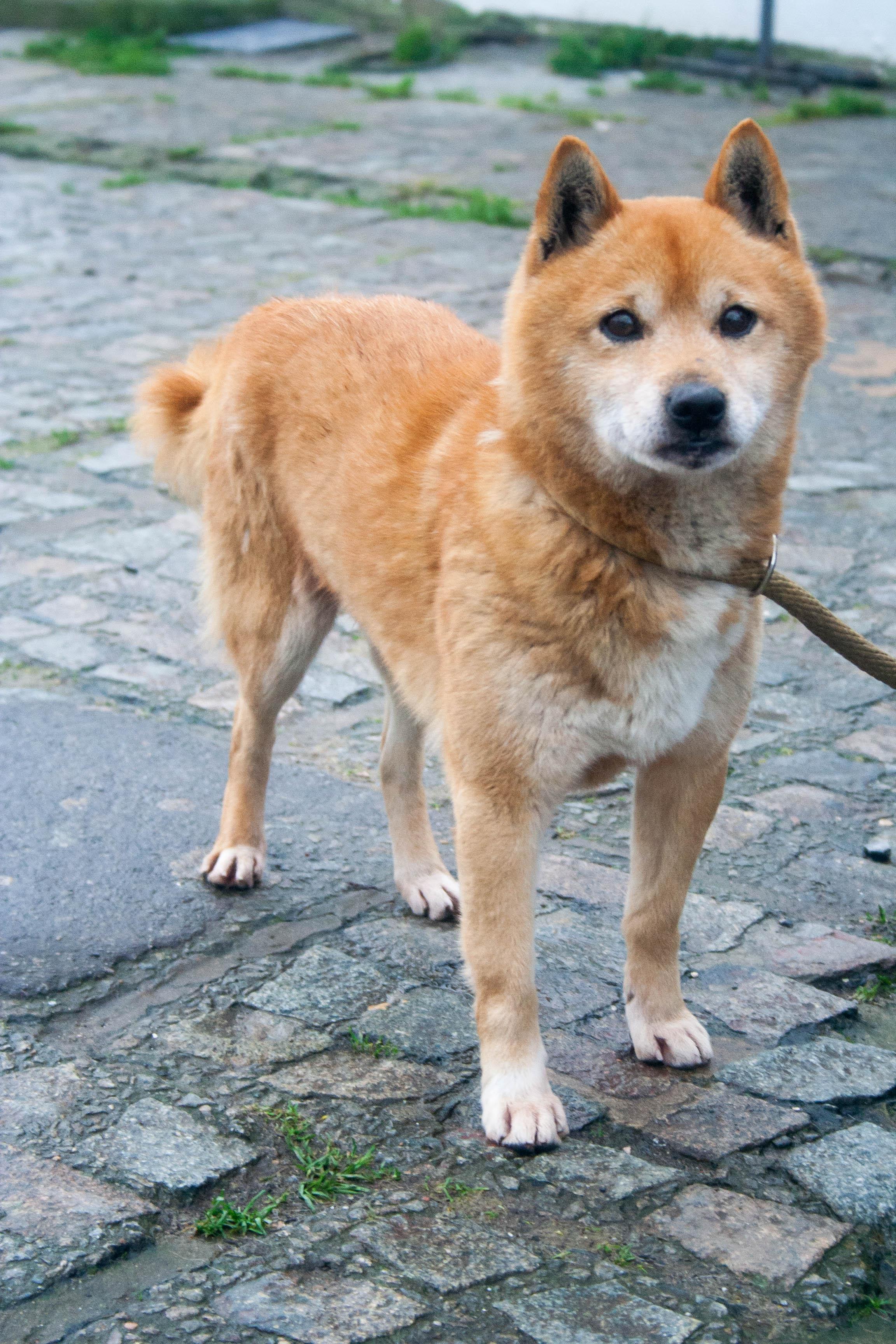 Yoshi (1)