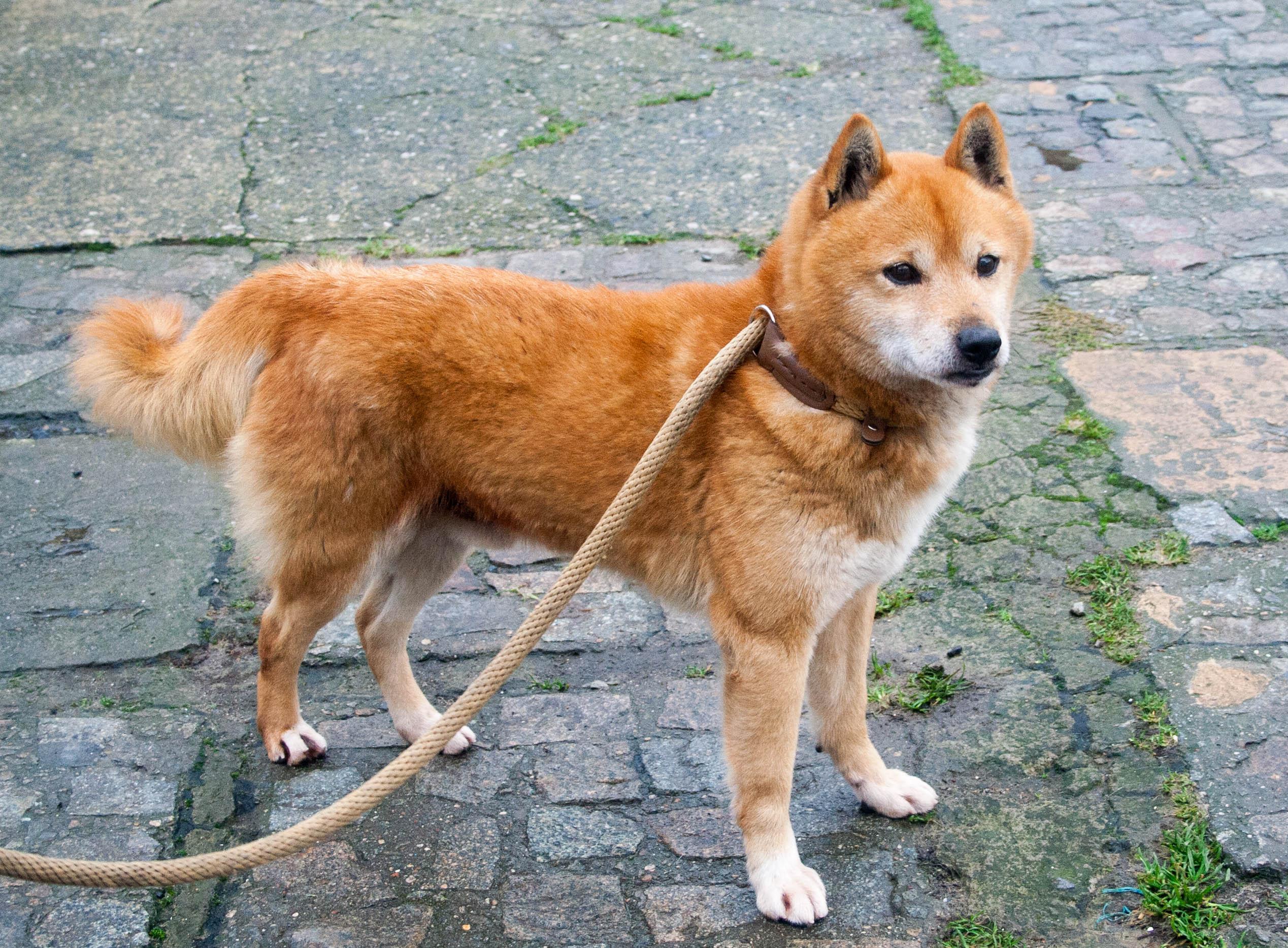 Yoshi (4)