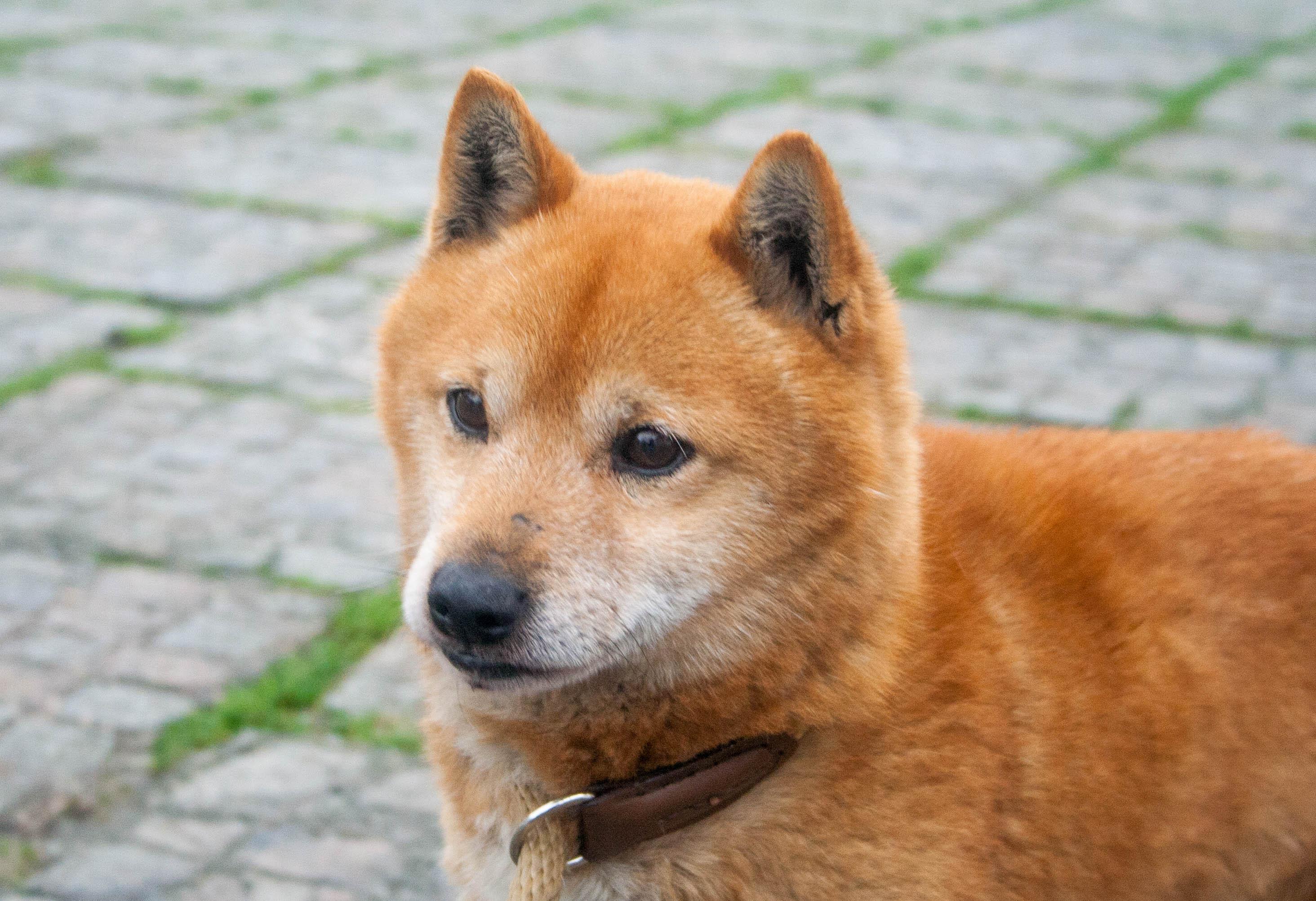 Yoshi (6)