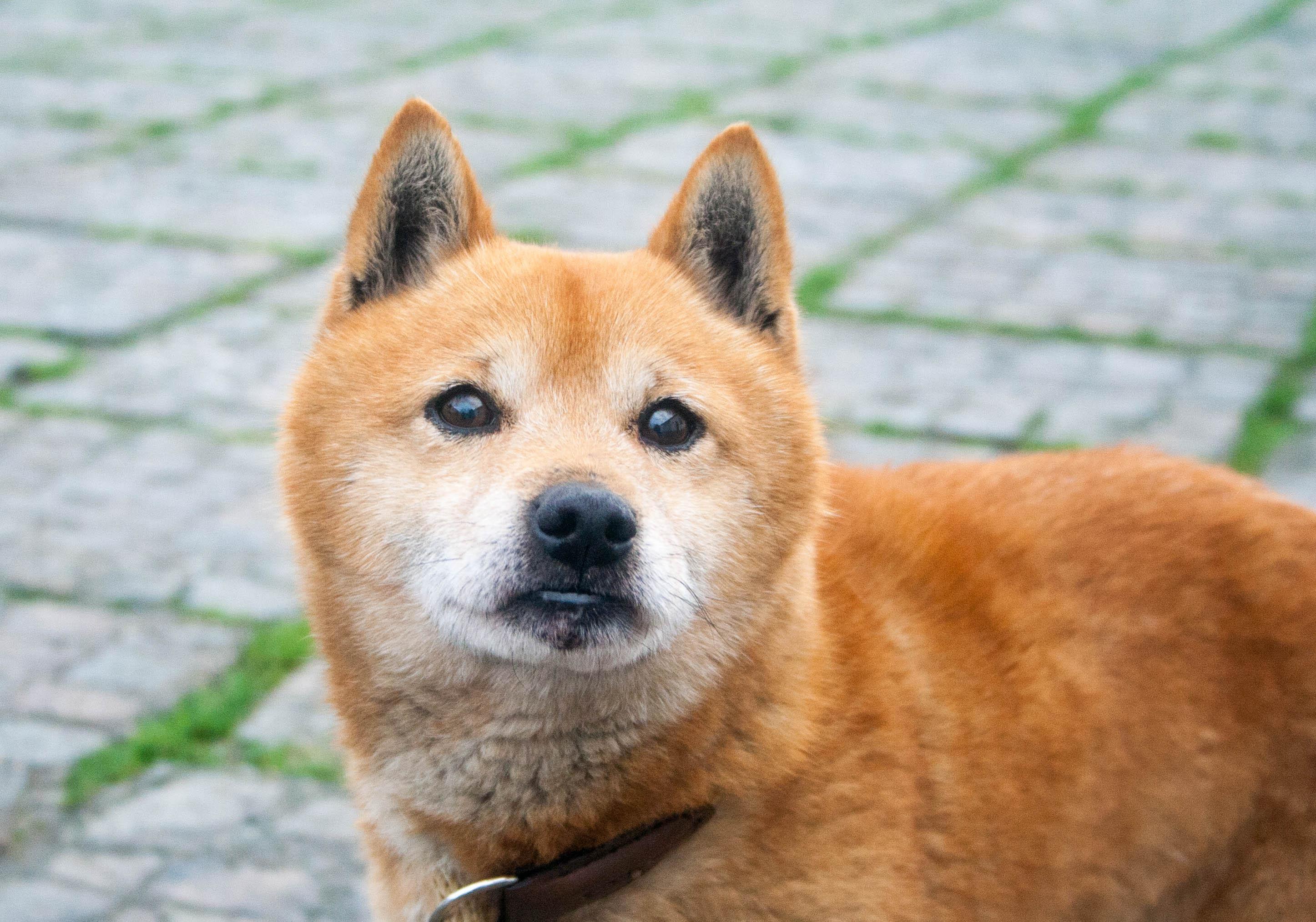 Yoshi (8)