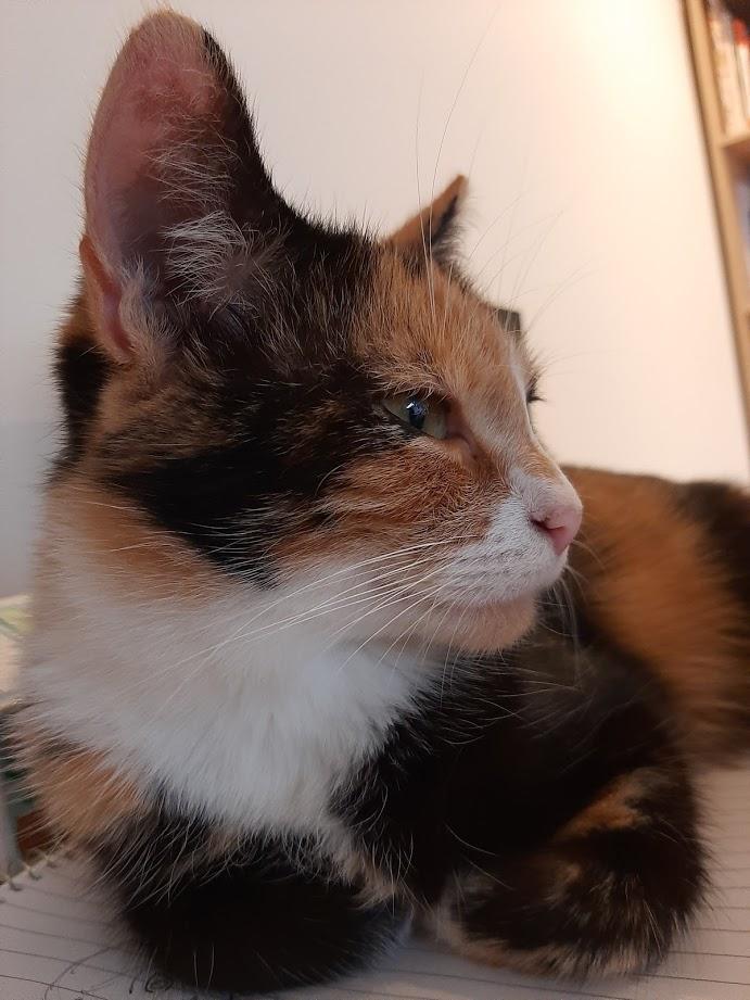 Beatrix3