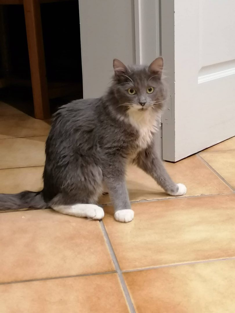 Octavie ♀ Othello ♂ – grands chatons ataxiques – FA