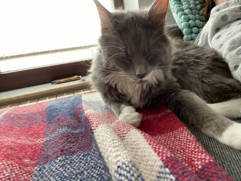 Octavie ♀ Othello & Oratio ♂ – grands chatons ataxiques – FA