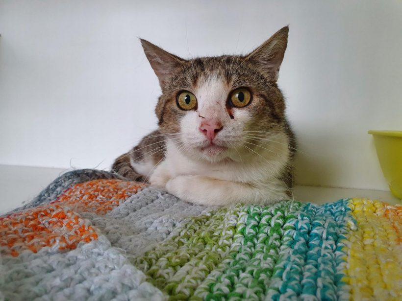 Grumpy ♂ Bar à chats