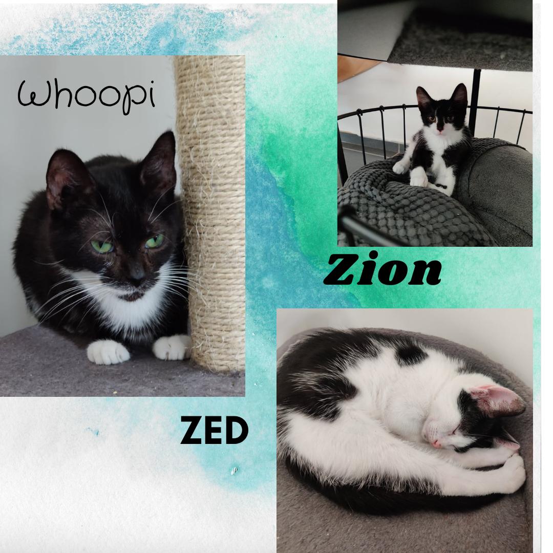 Zion (réservé) & Zed ♂ En famille d'accueil