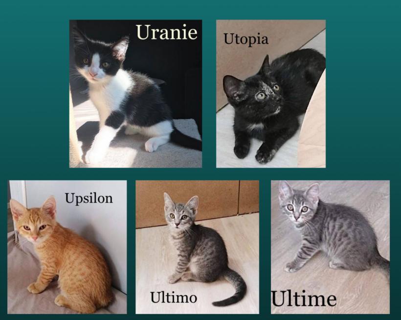 Uranie & Utopia ♀ Upsilon (réservé) , Ultimo & Ultime (réservé) ♂  En FA