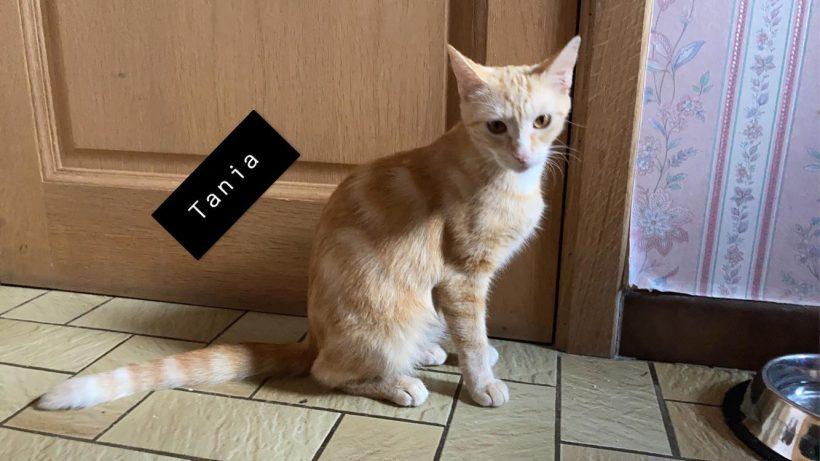 Tania & Twitch, Tigrou (réservé) et Twister (réservé)