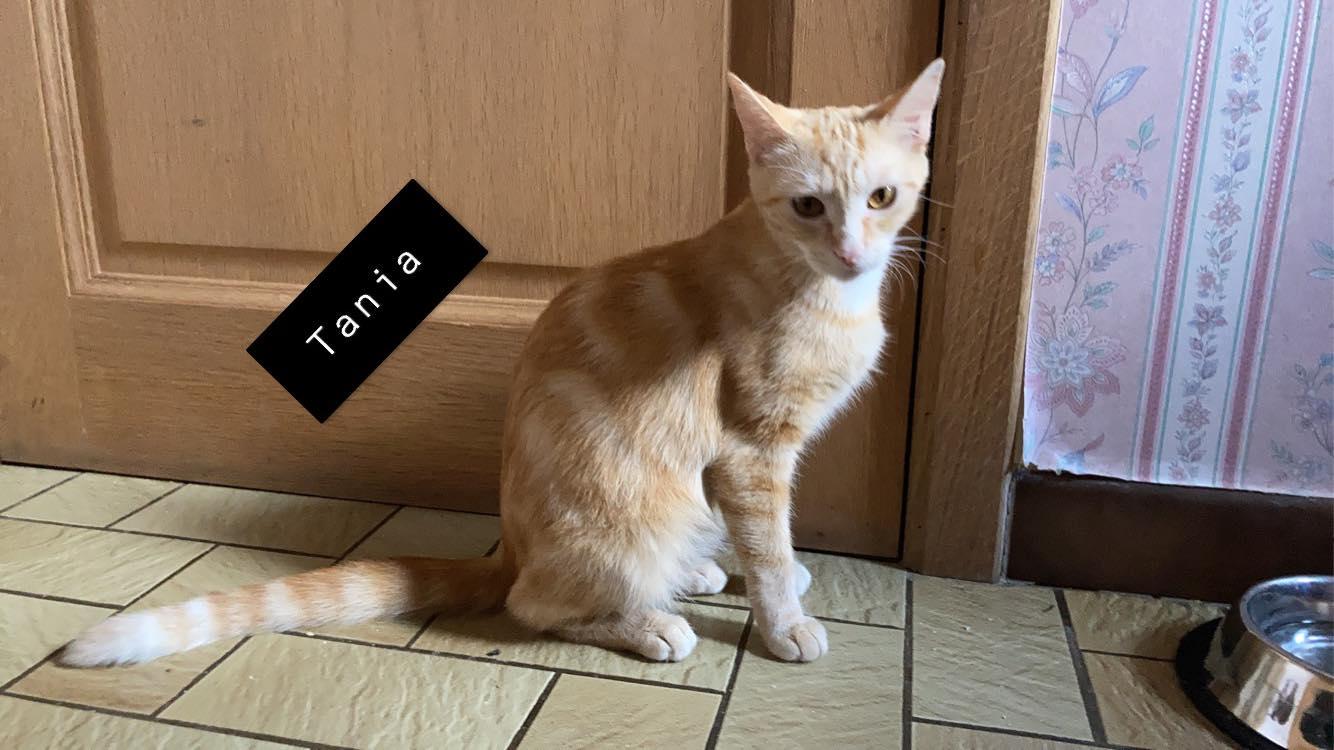 Tania ♀ En famille d'accueil