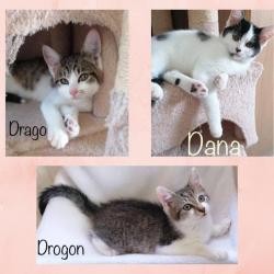 Dana ♀ Drago & Drogon (réservé) ♂ En famille d'accueil