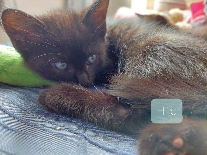 Hiro 🚹 en FA
