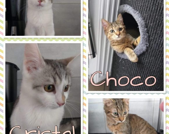 Choco 🚹 et Cristal 🚺 en FA