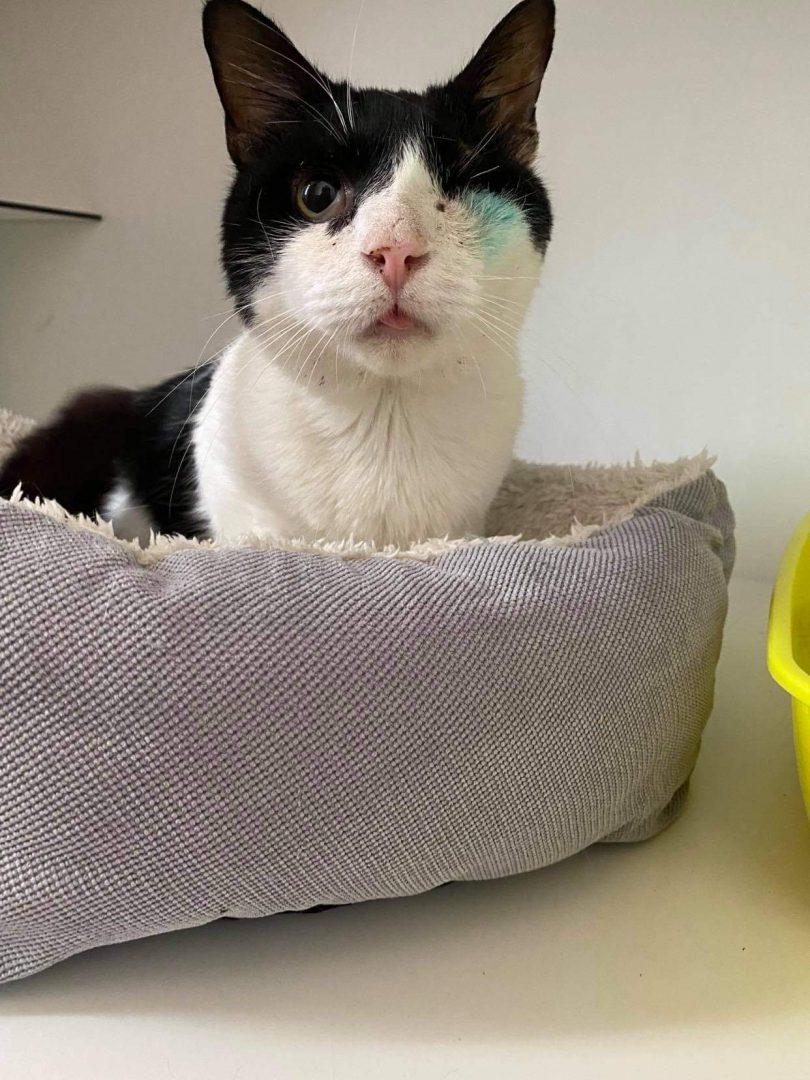 Gaston – Bar à chats